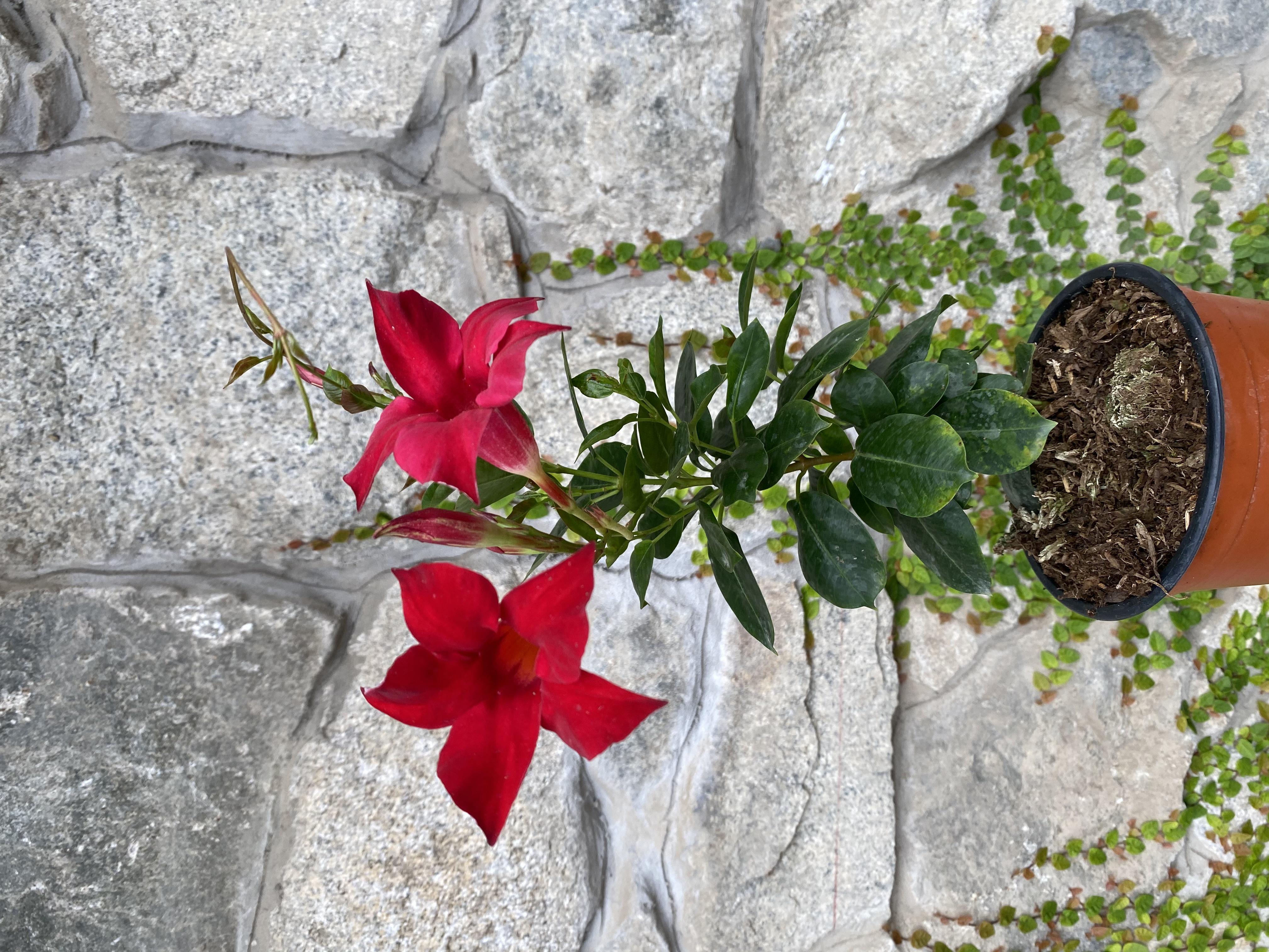 Plantas y flores: decoración del hogar